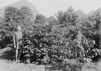 История появления кофе во Вьетнаме